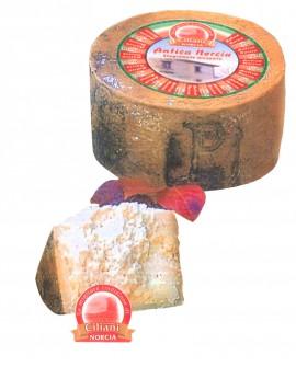 Pecorino ANTICA NORCIA stagionato piccante - ovino 1,9-2,1 Kg - vendita al pezzo - stagionatura 300 giorni - Ciliani